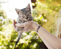 Adorable tabby kitten Stock Images