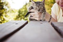 Adorable tabby kitten Stock Photos