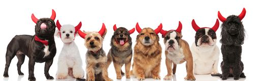 Adorable team of eight dogs dressed as devil stock photo