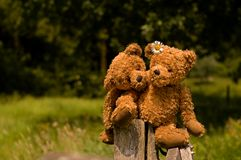 Adorable teddybear couple in love. Teddy couple sitting on the fence with great DOF Stock Photos