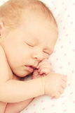Adorable tightly sleeping newborn baby girl Stock Photos