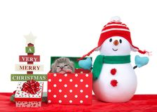 Tiny kitten peaking out of a Christmas present with snowman. Adorable tiny kitten one week old in a festive holiday box reaching out towards viewer, snowman in Royalty Free Stock Photo
