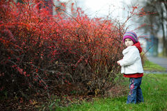 Adorable toddler in barberry bushes Stock Image