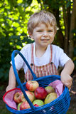 Adorable toddler with basket with apples Royalty Free Stock Images