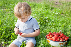 Adorable toddler with bowl strawberries on organic farm Stock Photo