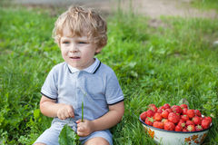 Adorable toddler with bowl strawberries on organic farm Royalty Free Stock Photography