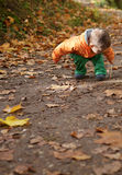Adorable toddler boy at fall Royalty Free Stock Photography