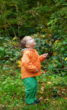 Adorable toddler boy in forest Royalty Free Stock Images