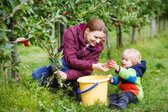 Adorable toddler boy of two years and his mother picking red app Royalty Free Stock Photography