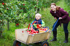 Adorable toddler boy of two years and his mother picking red app Royalty Free Stock Image
