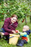 Adorable toddler boy of two years and his mother picking red app Stock Photography