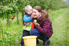 Adorable toddler boy of two years and his mother picking red app Royalty Free Stock Photo