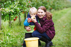Adorable toddler boy of two years and his mother picking red app Stock Photo