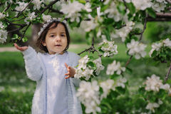 Adorable toddler child girl in light blue dressy outfit walking and playing in blooming spring garden Royalty Free Stock Image