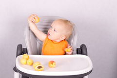 Adorable toddler eating an apricot in baby chair against the grey background.  Royalty Free Stock Images