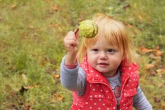 Adorable toddler girl with blond hair holding chestnut; autumn background stock photos