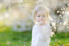 Adorable toddler girl in blooming cherry garden Royalty Free Stock Photography