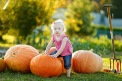 Adorable toddler girl climbing big pumpkin Royalty Free Stock Photos