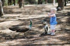 Adorable toddler girl feeding a peacock Royalty Free Stock Image