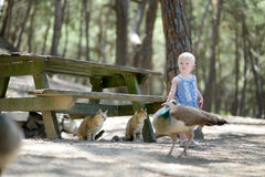 Adorable toddler girl feeding peacocks Royalty Free Stock Photography