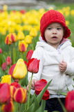 Adorable toddler girl gathering tulips in the garden Royalty Free Stock Photography
