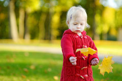 Adorable toddler girl holding yellow maple leaves Stock Image
