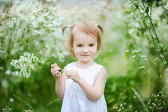 Adorable toddler girl in a meadow Stock Image