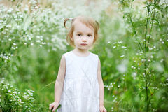 Adorable toddler girl in a meadow Stock Photography