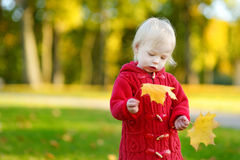 Adorable toddler girl portrait on autumn day. Adorable toddler girl holding yellow mapple leaves on beautiful autumn day Royalty Free Stock Photography