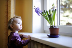 Adorable toddler by the window with the flowers Royalty Free Stock Photo