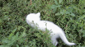 Adorable two white kitten on the lawn stock footage
