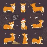 Adorable Welsh Corgi Dogs with Yellow Fur Set. That play, do tricks and in christmas hat vector illustrations on white background stock illustration