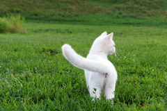 Adorable white kitten in the grass Stock Photo