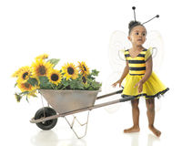 Adorable Worker Bee. An adorable 2 year old worker bee asking where she should haul her wheelbarrow full of sunflowers.  On a white background Royalty Free Stock Photos