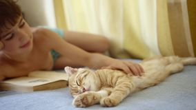 Boy in blue shorts reads a book lying on the bed near a ginger Scottish Fold Cat