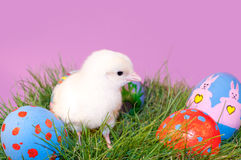 Adorable yellow Easter Chick in grass Stock Photo