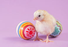 Adorable yellow Easter chick with two eggs Stock Photos