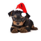 Adorable yorkie puppy in a santa hat Stock Photography