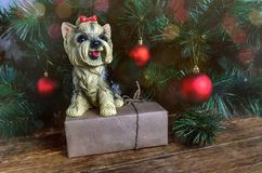 York Terrier, gift and Christmas decoration. An adorable yorkshire terrier dog with wrapped Christmas present Royalty Free Stock Image