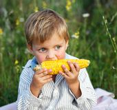 Adorable young boy eating corn on the cob Stock Photos