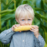 Adorable young boy eating corn outside Royalty Free Stock Image