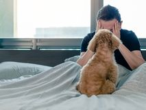 An adorable young brown Poodle dog looking at the owner who feel sad and serious on the bed after wake up in the morning with royalty free stock photos