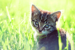 Adorable young cat in the grass Royalty Free Stock Photos