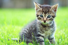 Adorable young cat in the grass Stock Photos