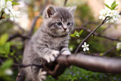 Adorable young cat in the grass Royalty Free Stock Image