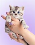 Adorable young cat   Royalty Free Stock Photos