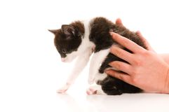 Adorable young cat in woman's hand Royalty Free Stock Photos