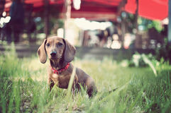 Adorable young dog in the grass Royalty Free Stock Photography