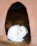 Adorable young white bunny rabbit Royalty Free Stock Photos