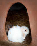 Adorable young white bunny rabbit Stock Photo